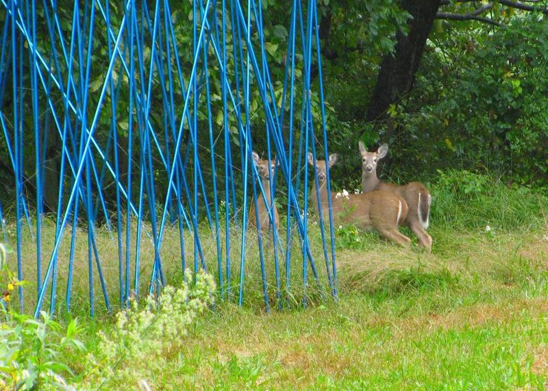 Kept Out, Stacy Levy, LandLab, CFEVA, Schuylkill Center for Environmental Education, DoNArTNeWs